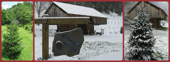 Wilson Glyn Christmas Tree Farm